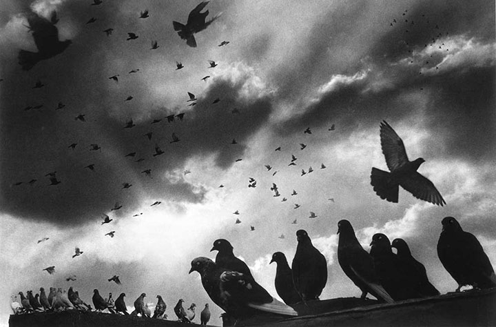 What a Flock! NYC, 1956