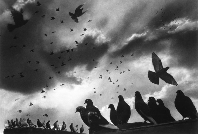 Pigeons, 1956 Here I used NINE negatives.  Believe me it took a long time to print