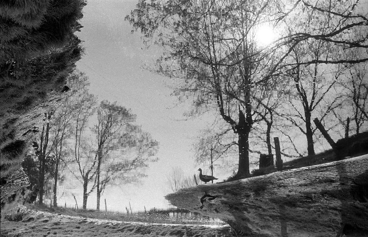 Duck On The Riverbank, Ringoes, NJ, 1962