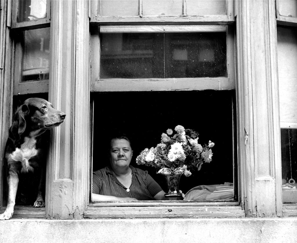 Window watcher dog, 1949